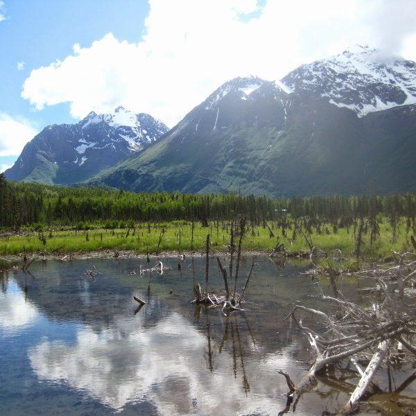 Our Summer Alaska Trip to Anchorage & Denali